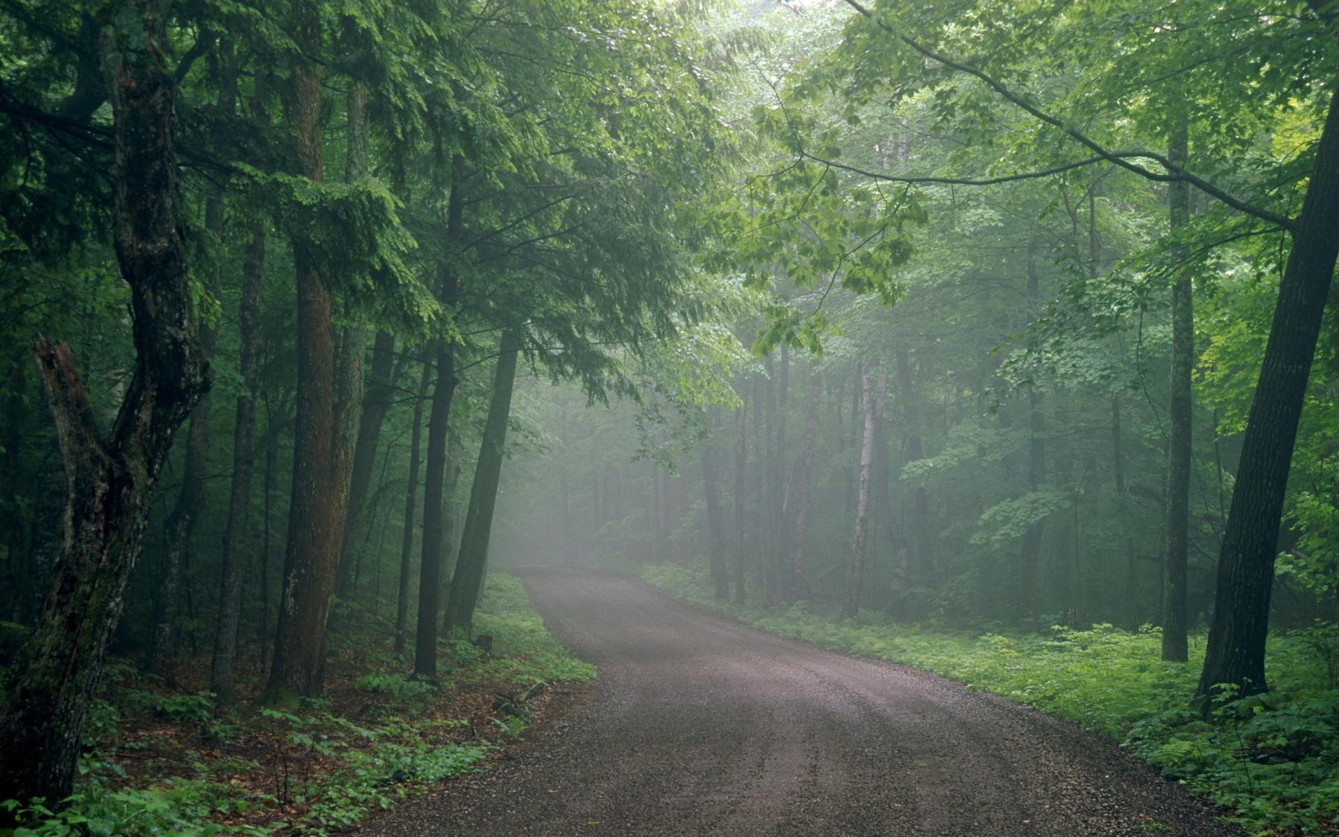 Road through foggy forest wallpaper 6204 1920x1200