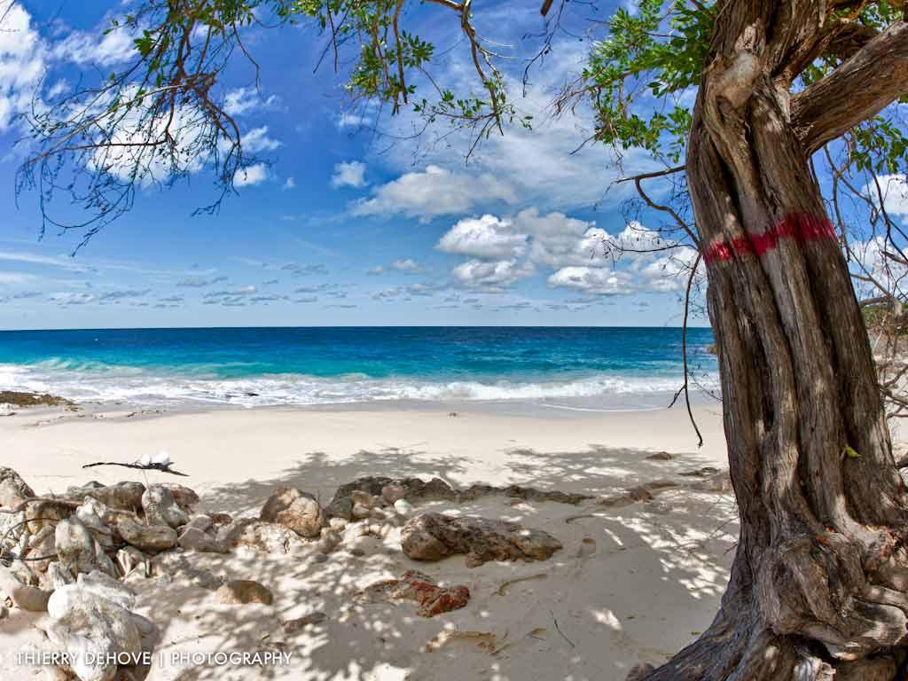 Caribbean Beach Desktop Wallpaper for Pinterest 1024x768