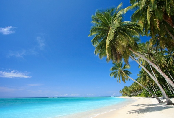 Wallpaper caribbean sea palm beach sea caribbean desktop wallpaper 590x400