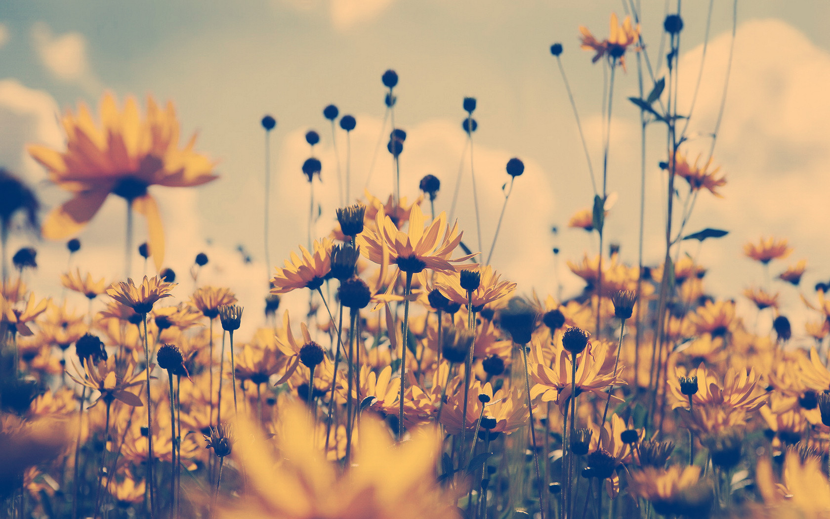 40 Images About Flower On We Heart It See More Flowers Vintage And Background