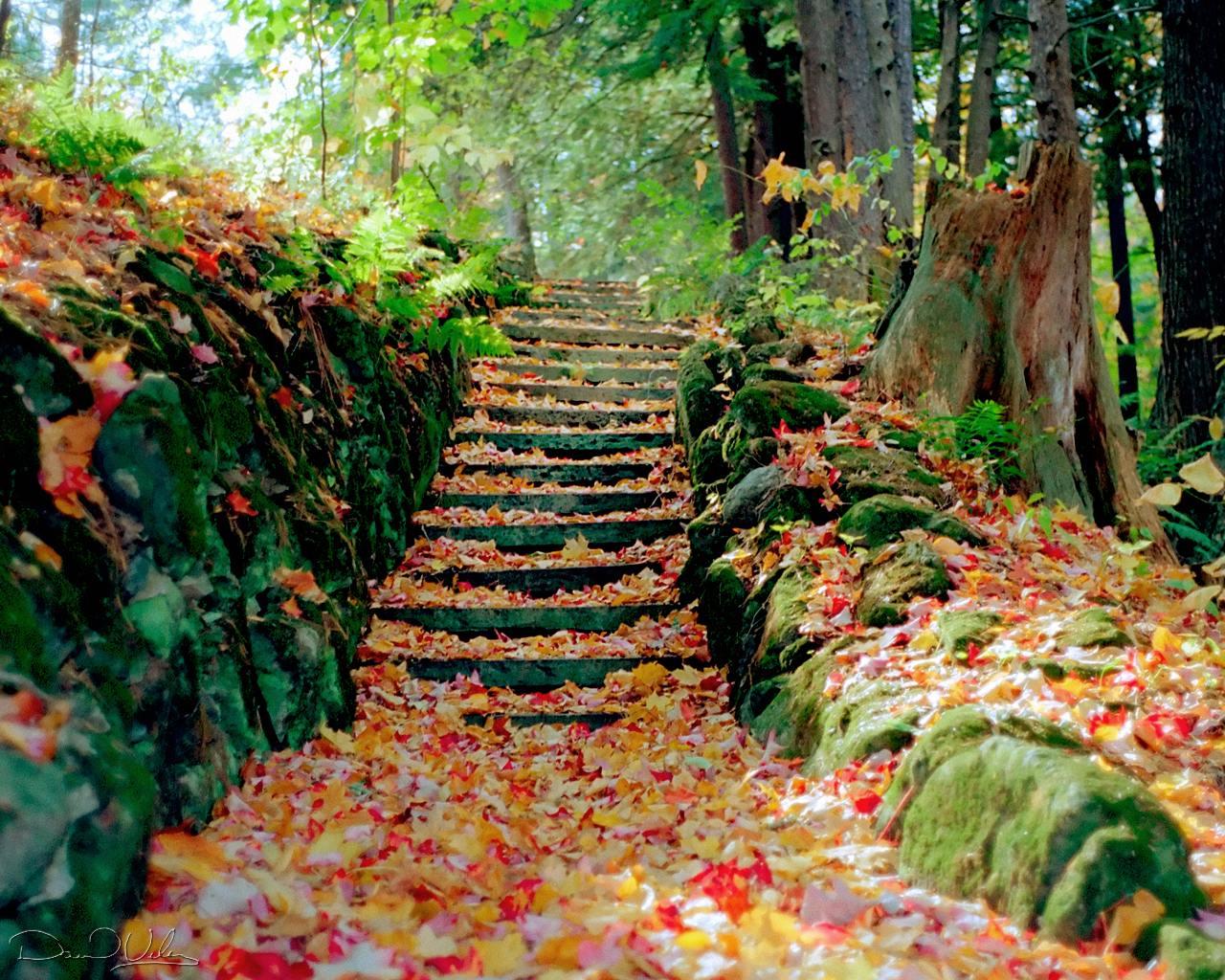 autumn season hd wallpaper autumn season hd wallpaper autumn season hd 1280x1024