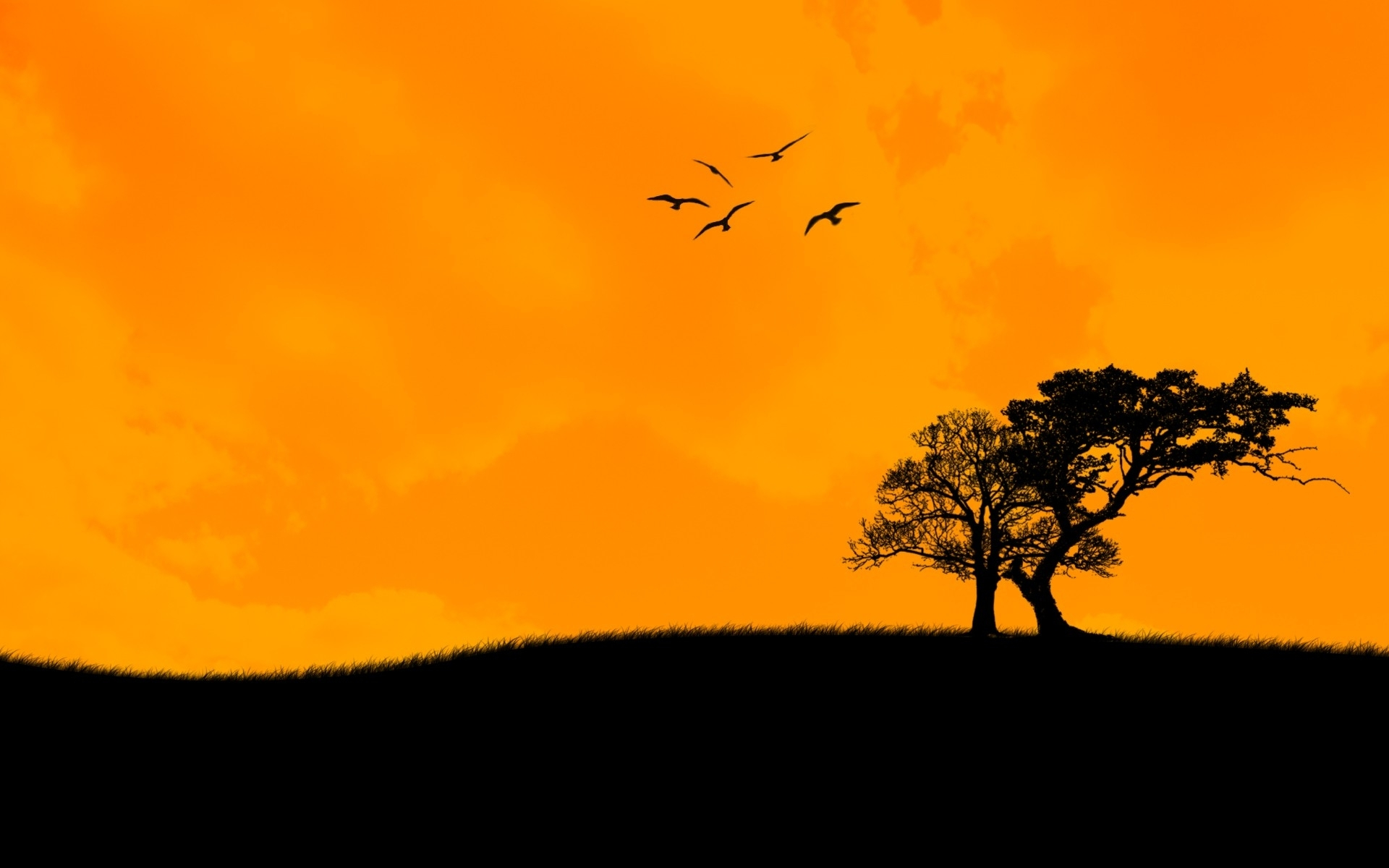 Sunset Trees Birds Wallpaper Anime Wallpaper Background Photo 1920x1200