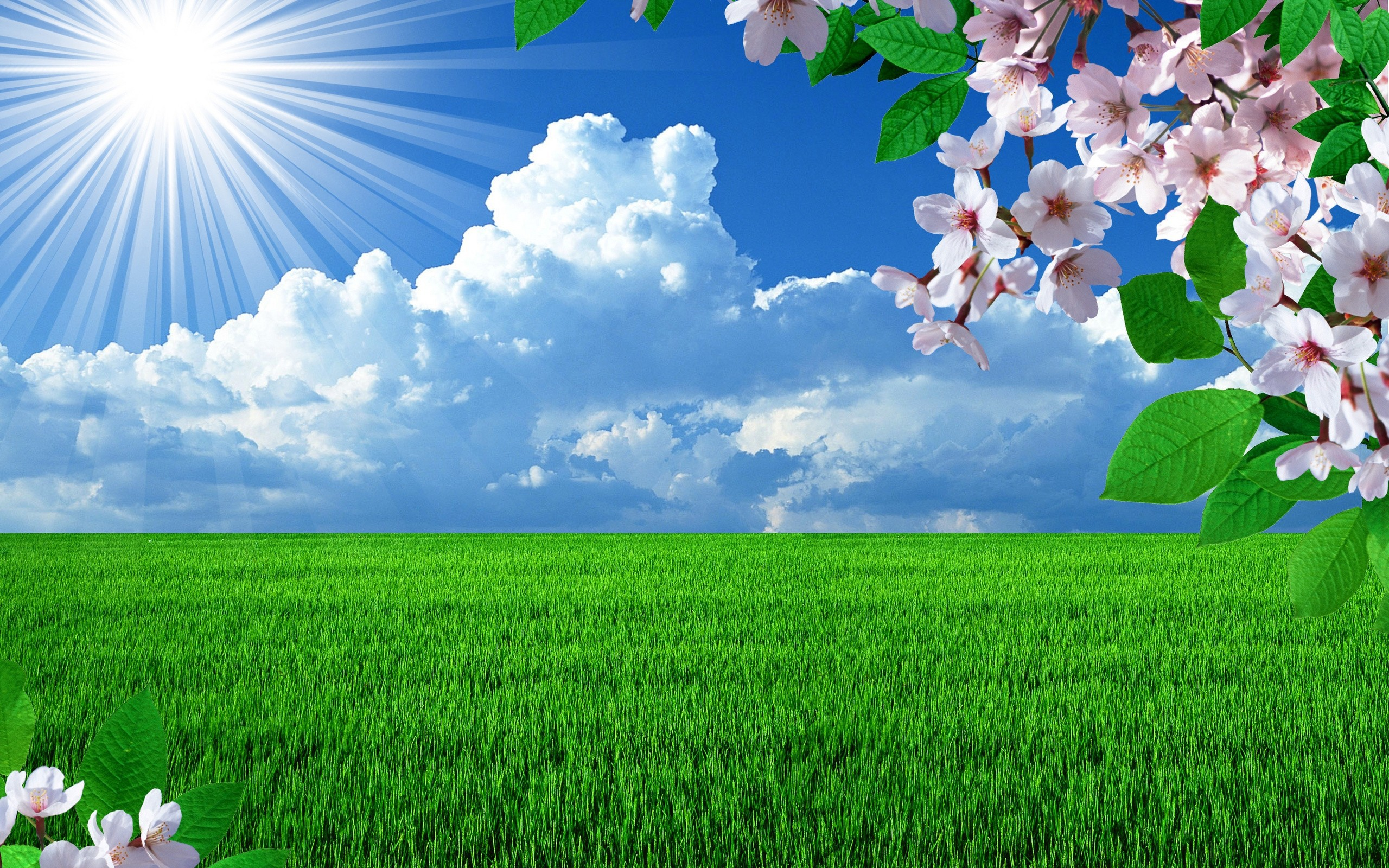 Beautiful spring field wallpapers and images   wallpapers pictures 2560x1600