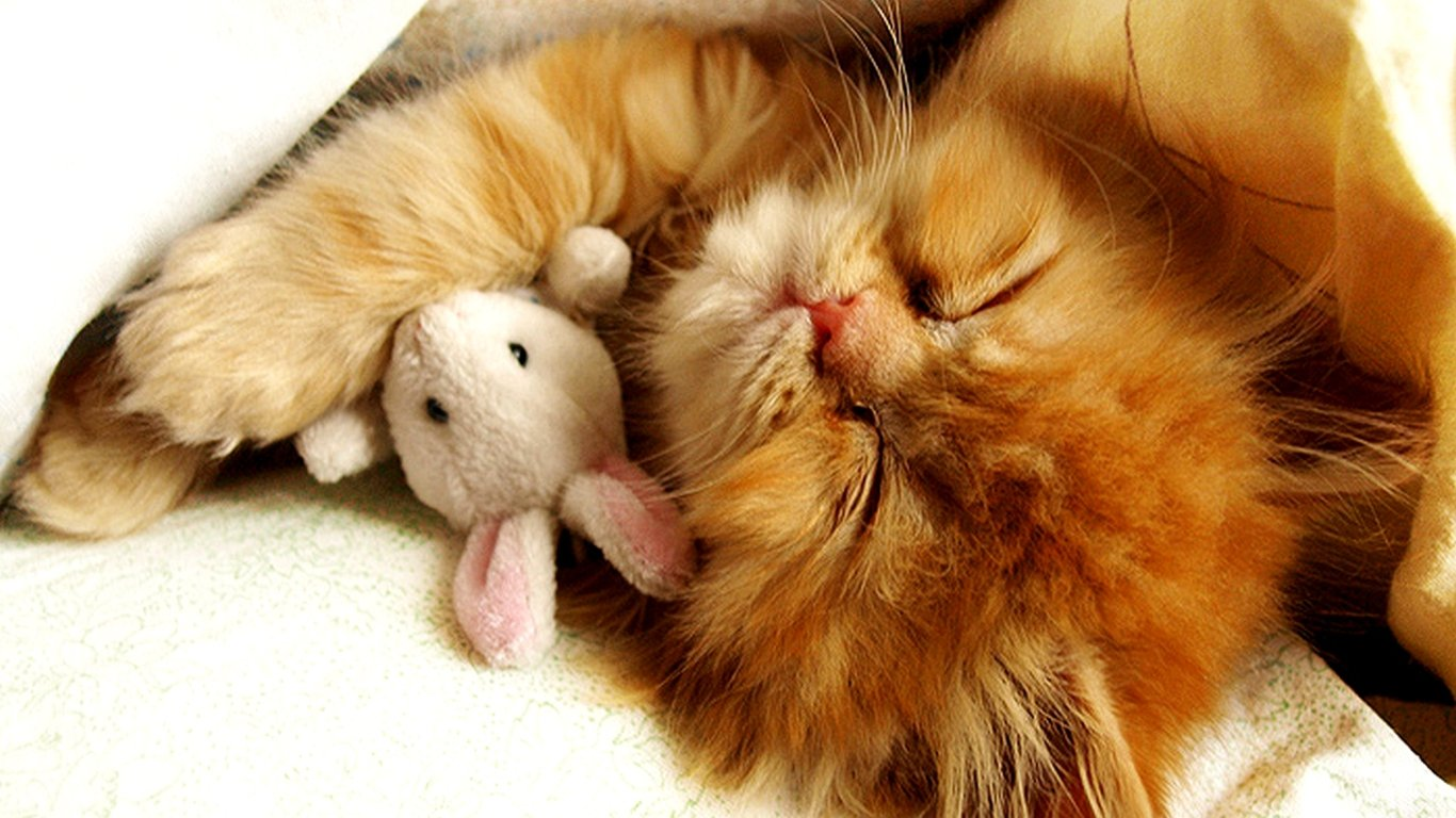 Cute Kitten Wallpaper 1366x768