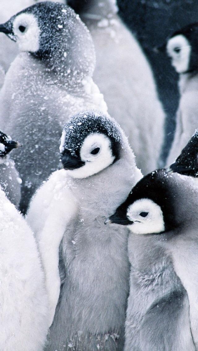 640x1136 Frozen Penguins Iphone 5 wallpaper 640x1136