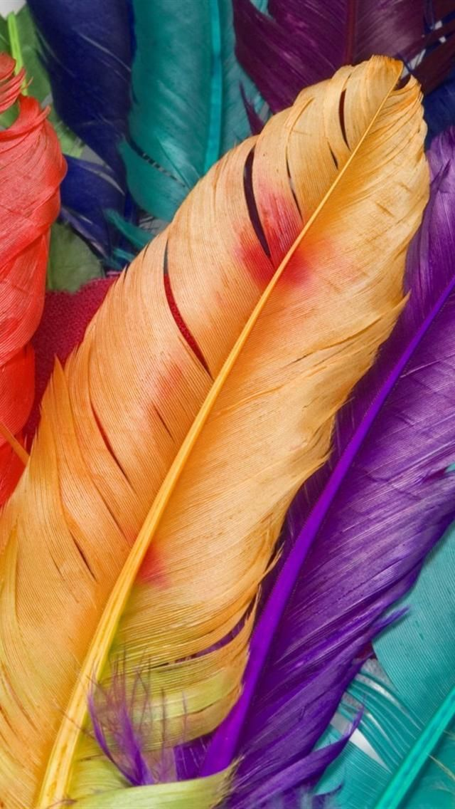 Colored Feathers iPhone Wallpaper Background for iPhone in 2019 640x1136