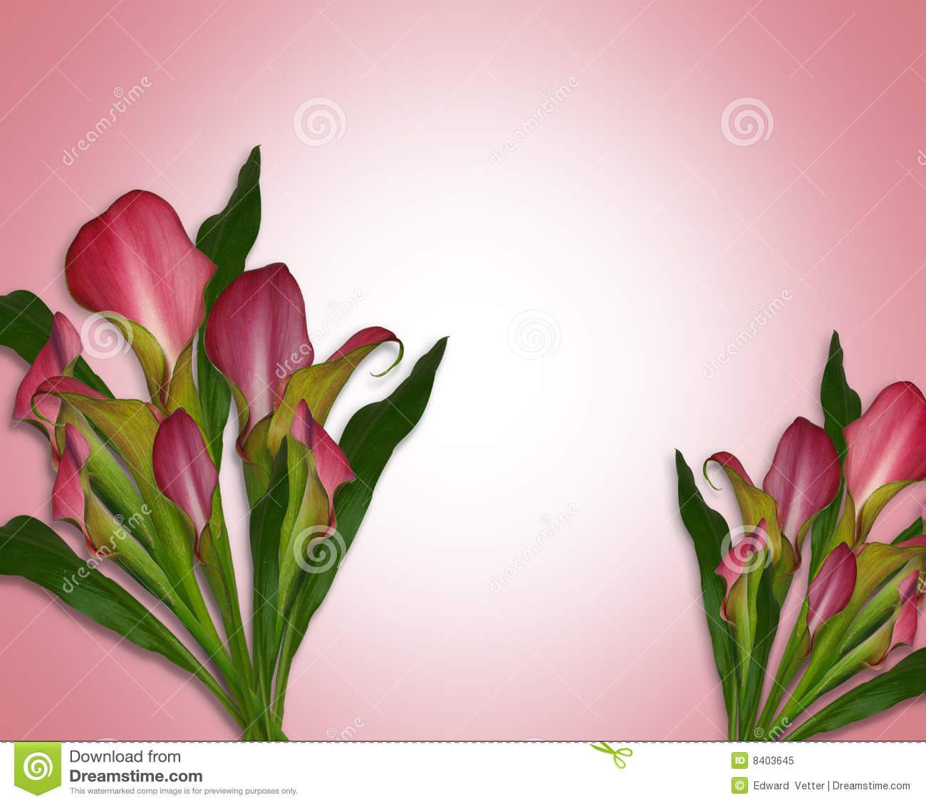Download Calla Lily Border Clipart Calla Lily Drawing Calla Lily