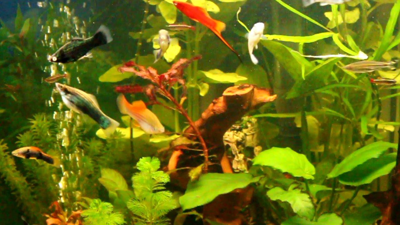 description fish tank live wallpaper aquarium live wallpaper for 1280x720