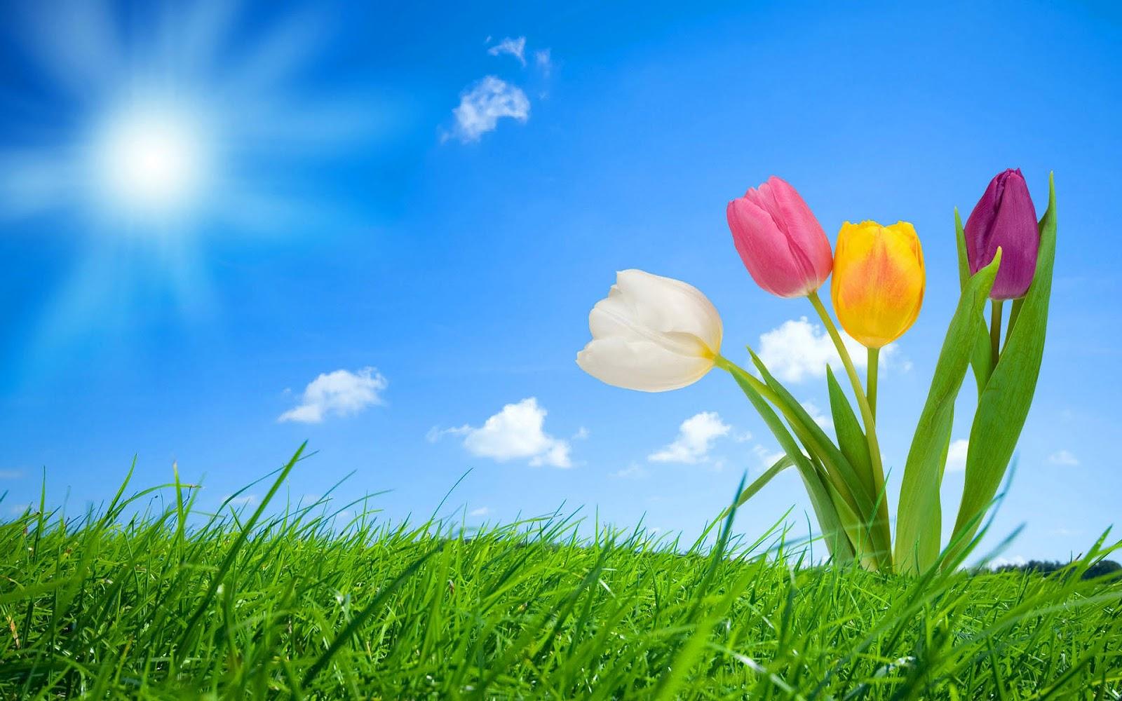 Spring Desktop Background Flowers Wallpapers Smiley