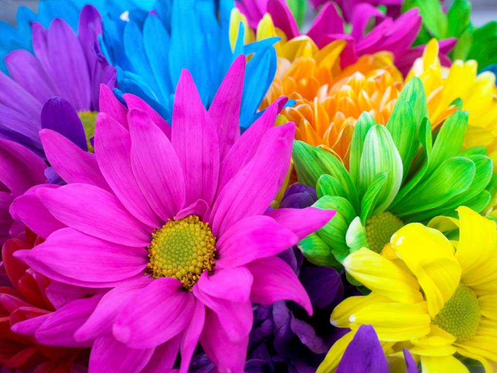 Pictures Of Bright Flowers   Desktop Backgrounds 1024x768