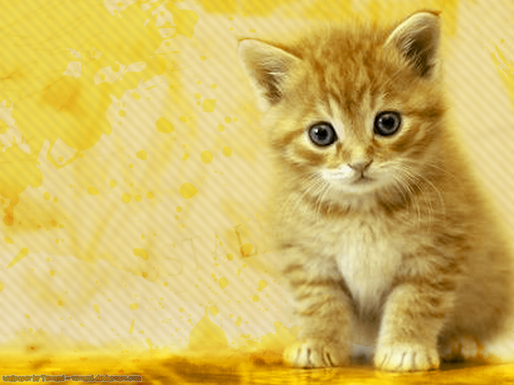 WALLPAPERS WORLD Cats wallpapers 1024x768
