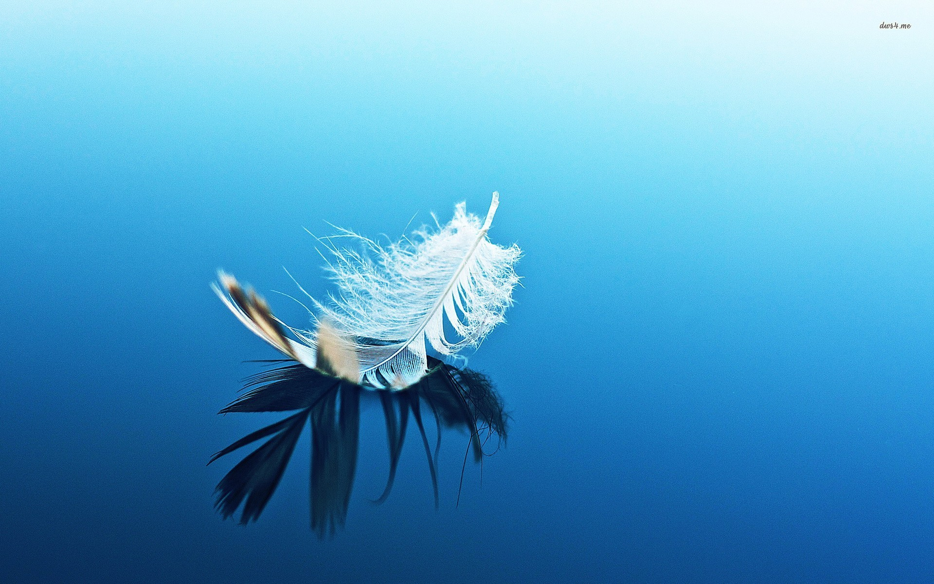 White feather on blue surface wallpaper   Photography wallpapers 1920x1200