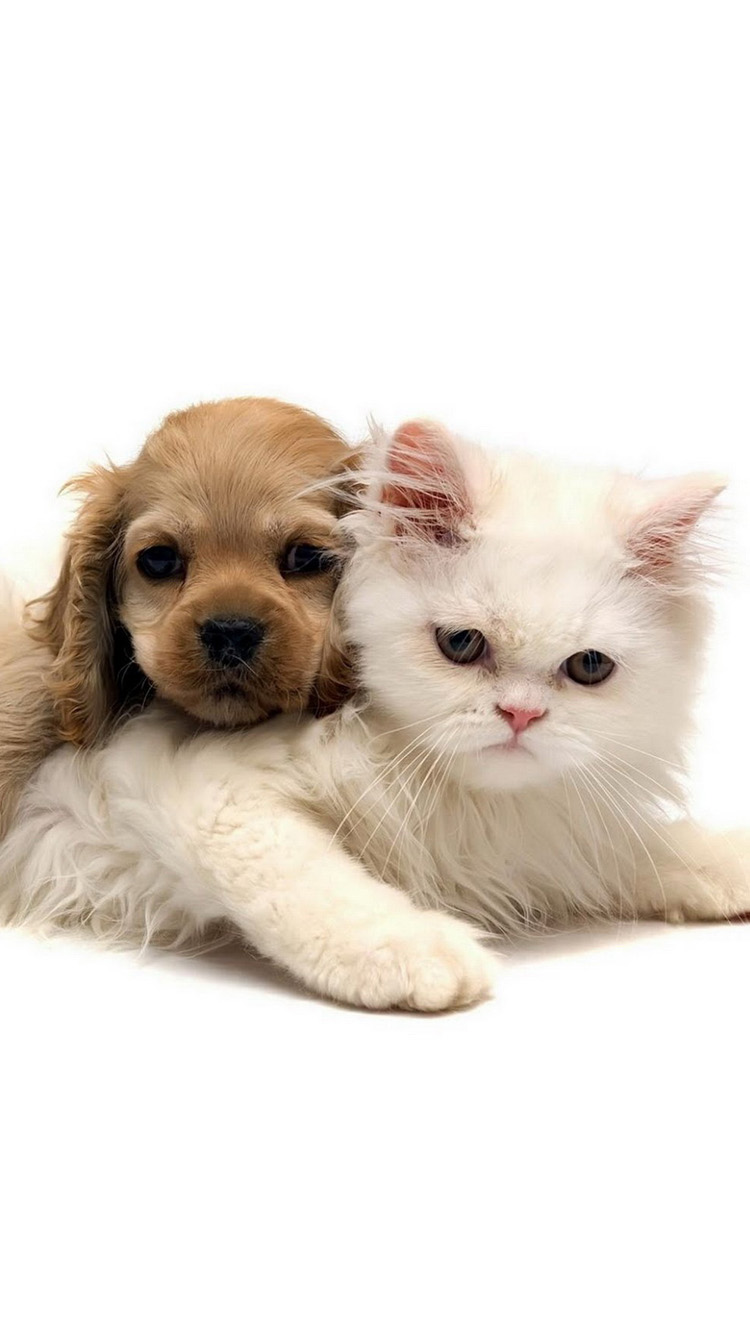 Free Download Cats And Dogs Photo Iphone 6 Wallpaper Hd Iphone 6 Wallpaper 750x1334 For Your Desktop Mobile Tablet Explore 99 Cat And Dogs Wallpapers Cat And Dogs Wallpapers