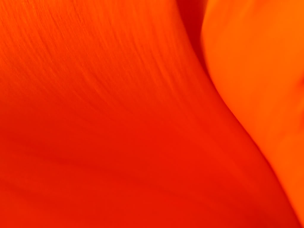Wallpaper Orange Color Wallpapersafari