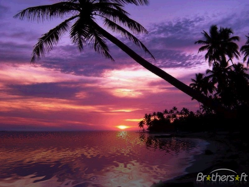 Surrealism Hd Wallpapers Backgrounds High Definition: Tropical Sunset Wallpaper Desktop