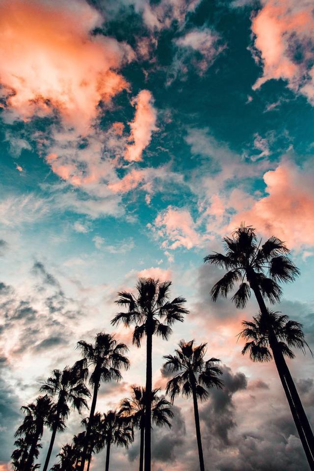 fotografas Fotografa in 2019 Summer wallpaper Screen 640x960
