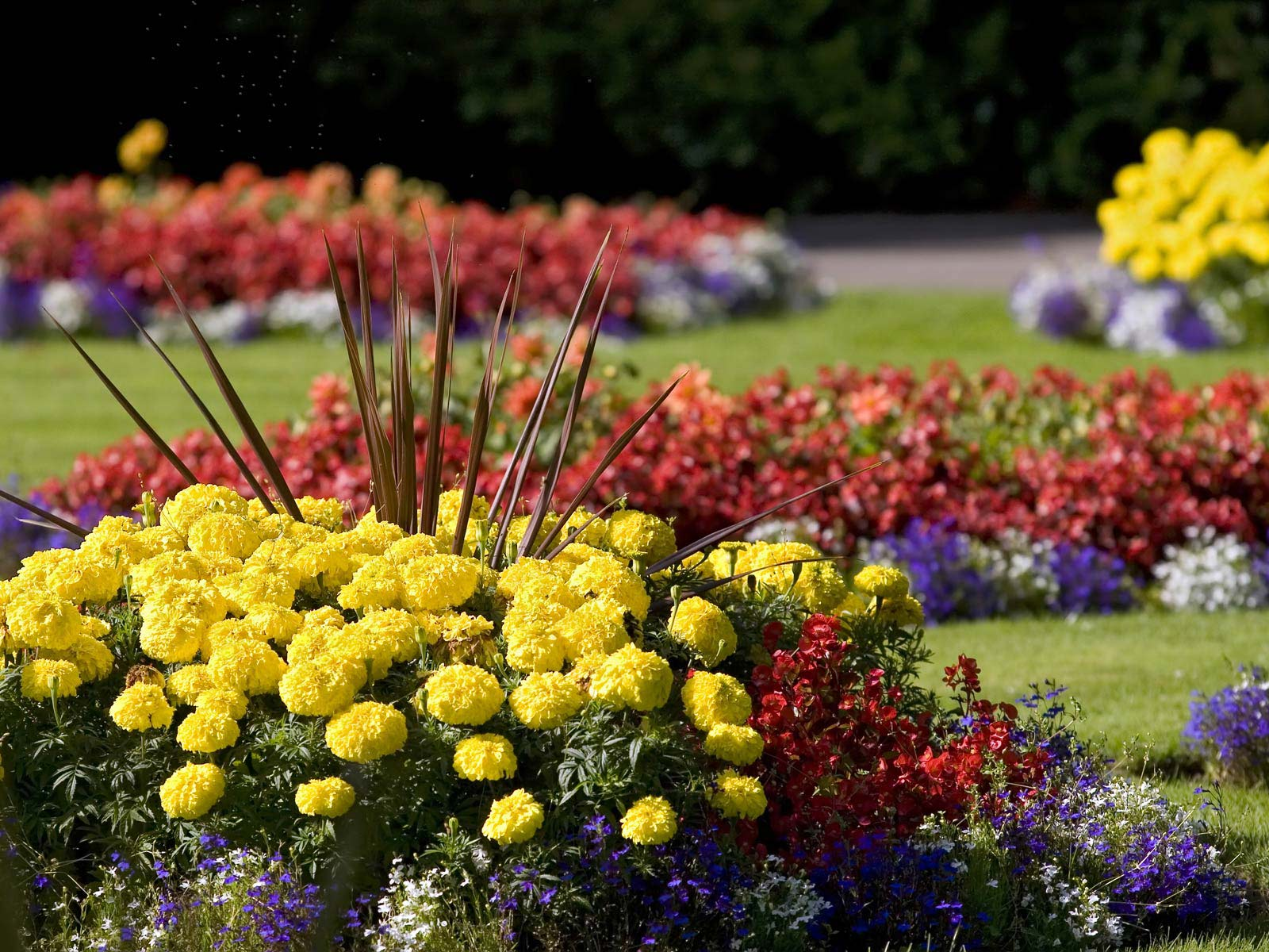 Desktop wallpaper of colourful summer flower beds at the Radcliffe 1600x1200