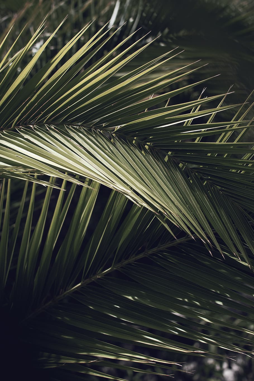 HD wallpaper palm tree plant arecaceae spain vegetation 910x1365