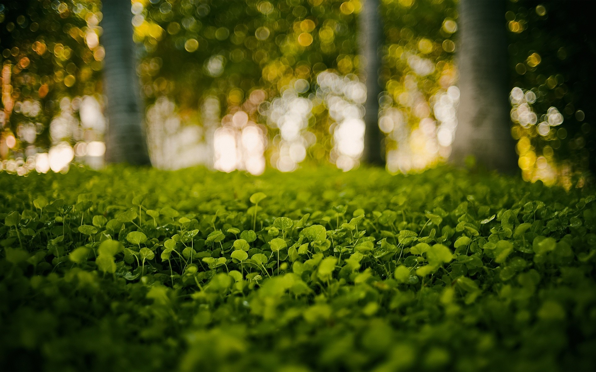 Daily Wallpaper Green Forest I Like To Waste My Time 1920x1200