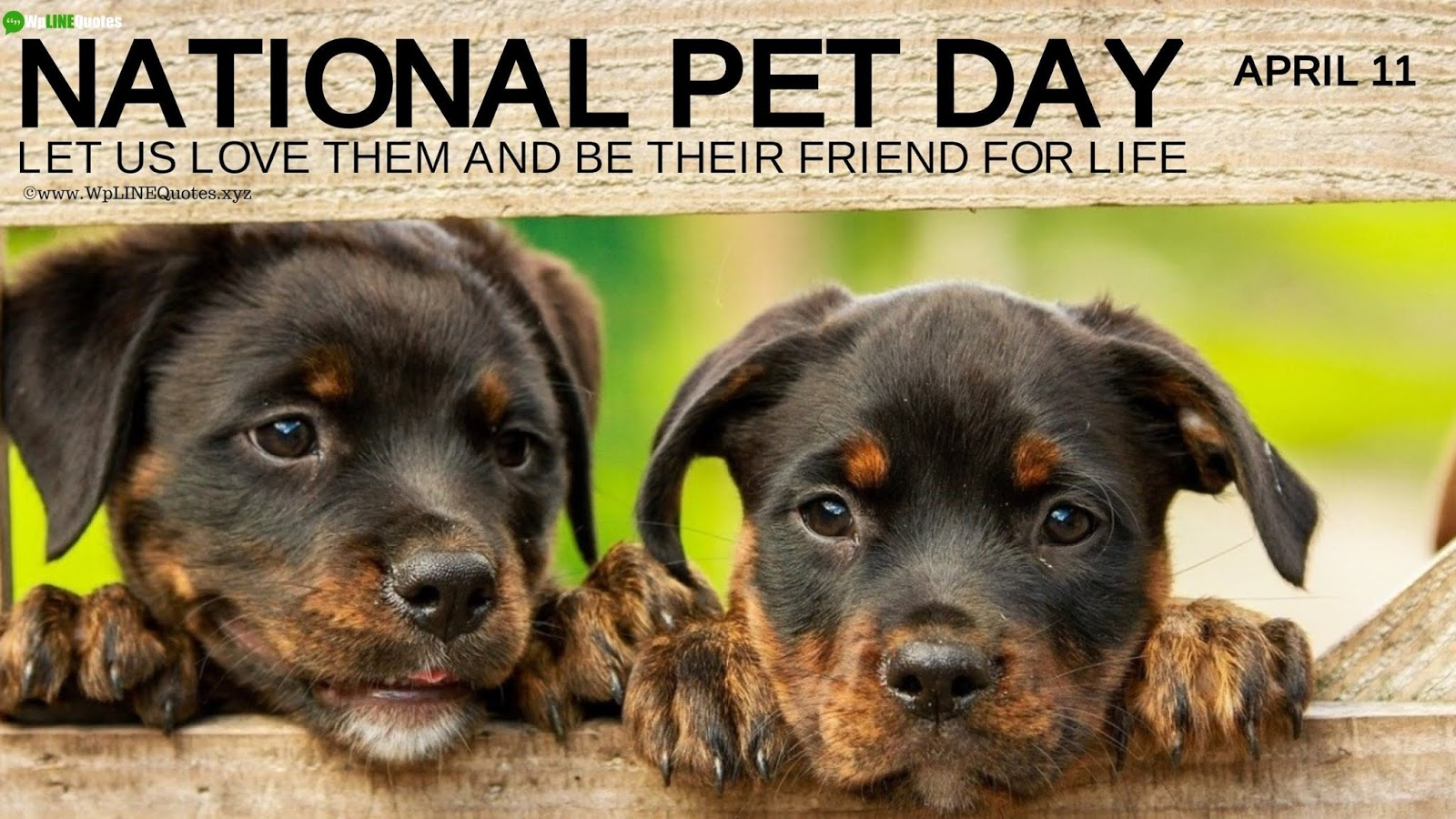 34 Best National Pet Day 2020 Quotes Wishes Captions 1600x900