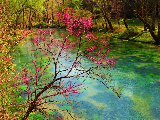 Spring Branch   Traveler Photo Contest 2011   National Geographic 608x456