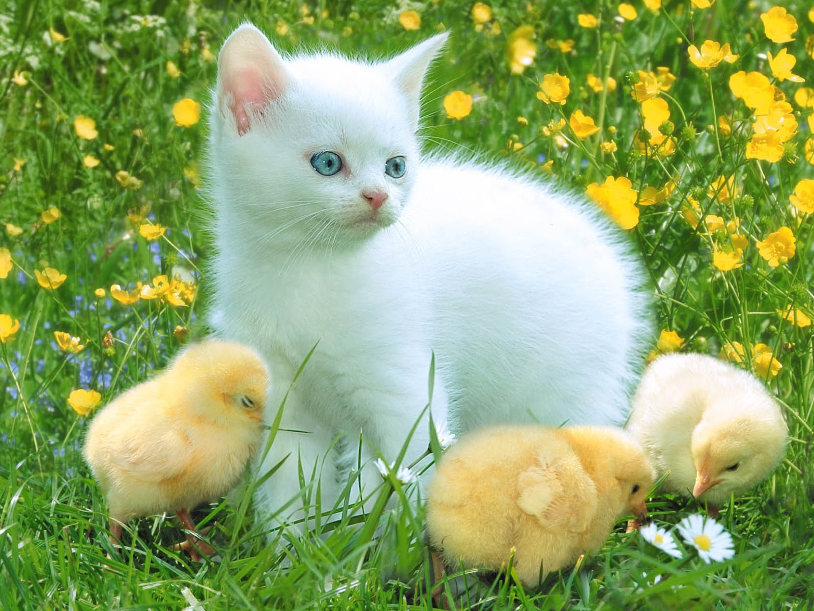 easter monday and i want to share some awesome easter cat wallpapers 1600x1200