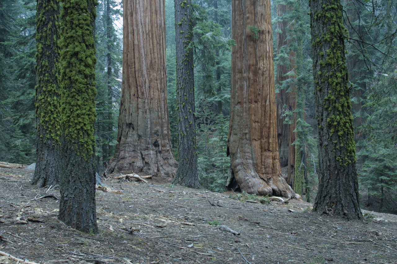 Sequoia National Park Wallpapers In HD Quality   HD Wallpapers Inx 1280x853