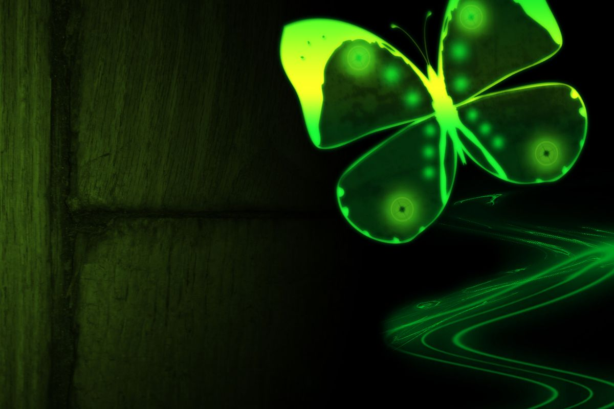 Neon Green Butterfly Wallpapers 1200x800