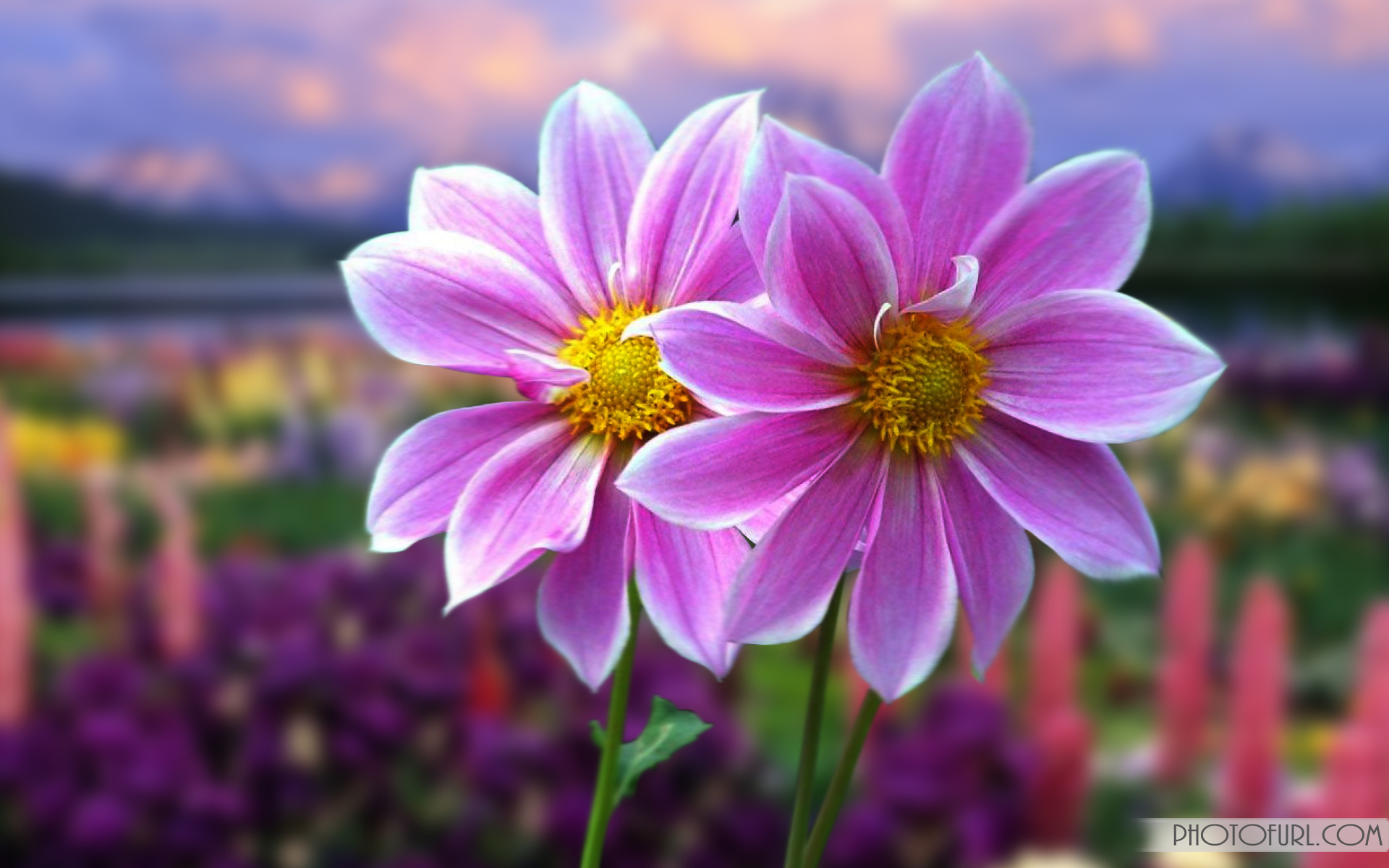 most beautiful flowers - HD1920×1200