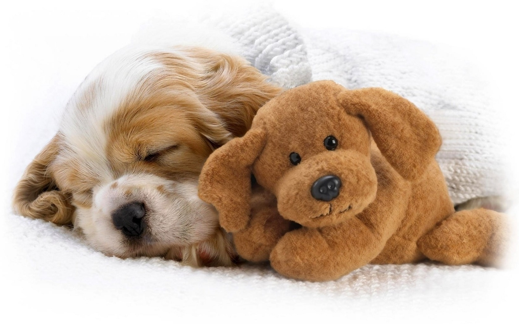 Puppy Wallpapers And Screensavers