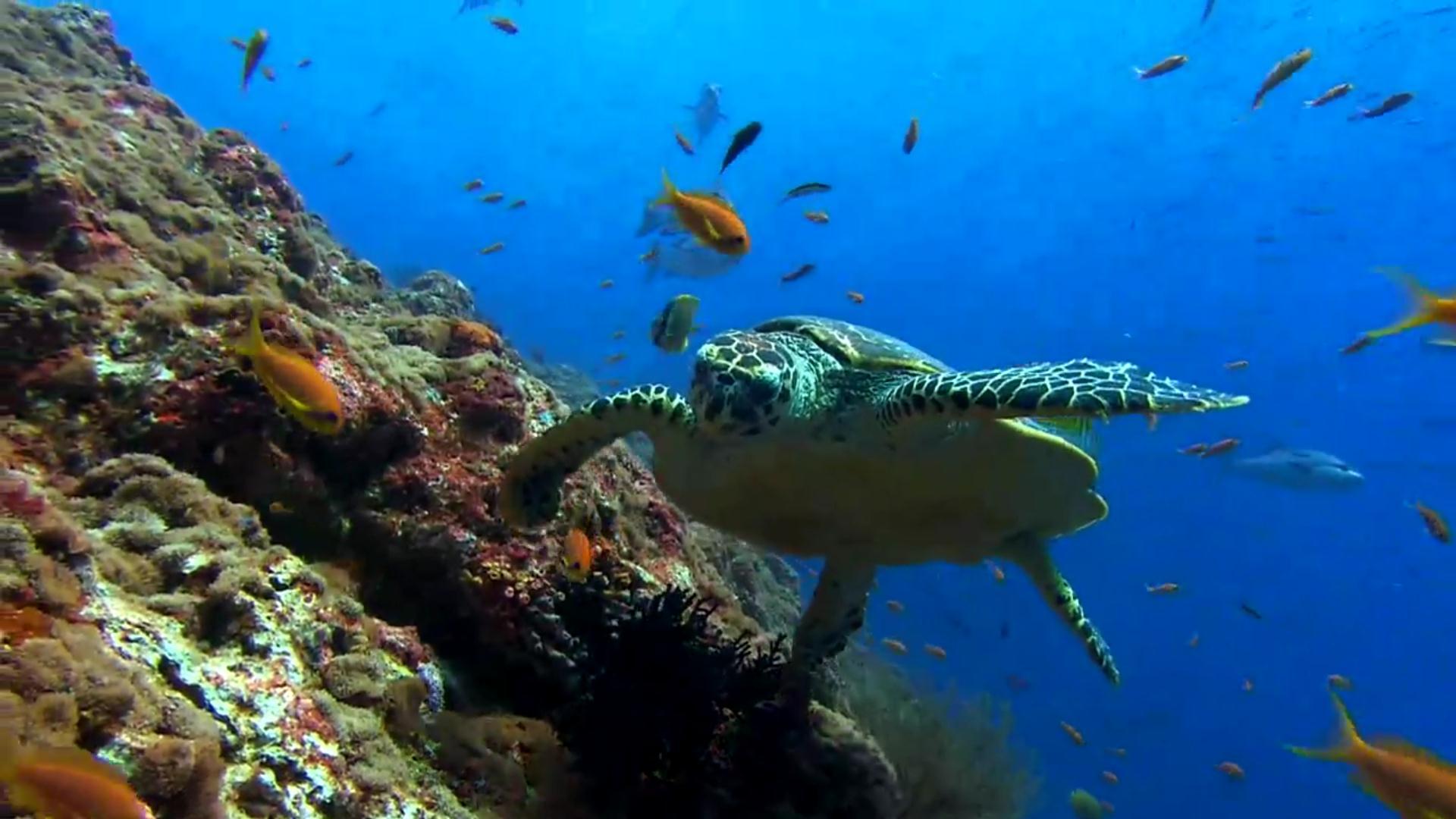Sea Turtle HD Wallpaper WallpaperSafari