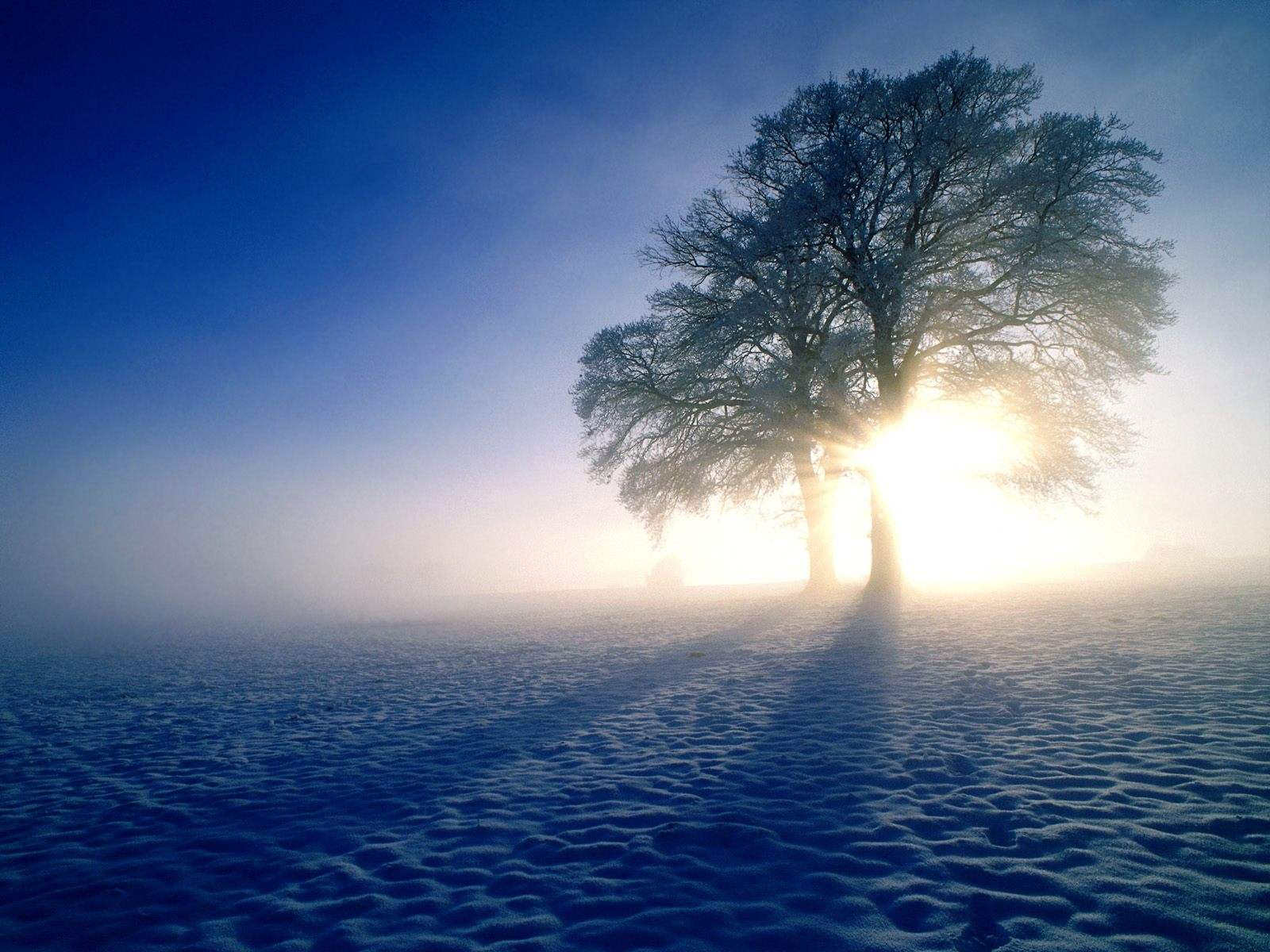 free winter scenes wallpaper which is under the winter wallpapers 1600x1200