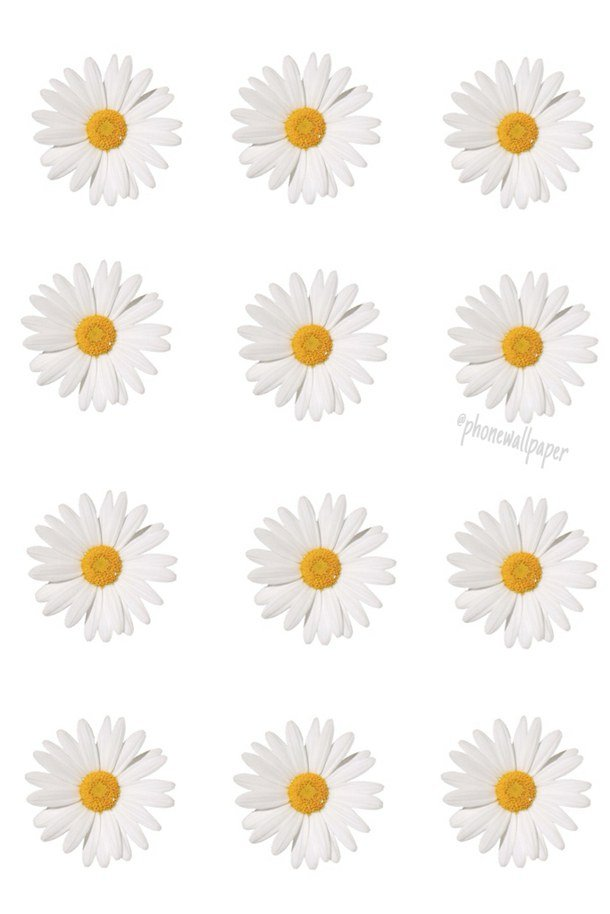 daisy mine overlay transparent tumblr wallpaper overlay daisy 610x914