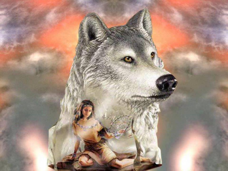 dreamcatcher native wolf spirit wallpaper - photo #26
