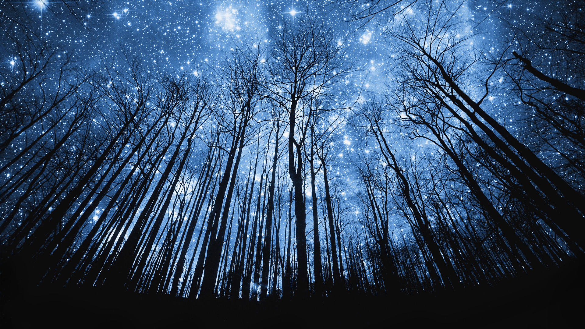 Hd wallpaper night - Stars Shining On The Night Sky Above The Forest Full Hd High Quality
