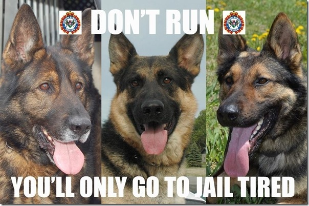 Police dogs had a message for us 604x402