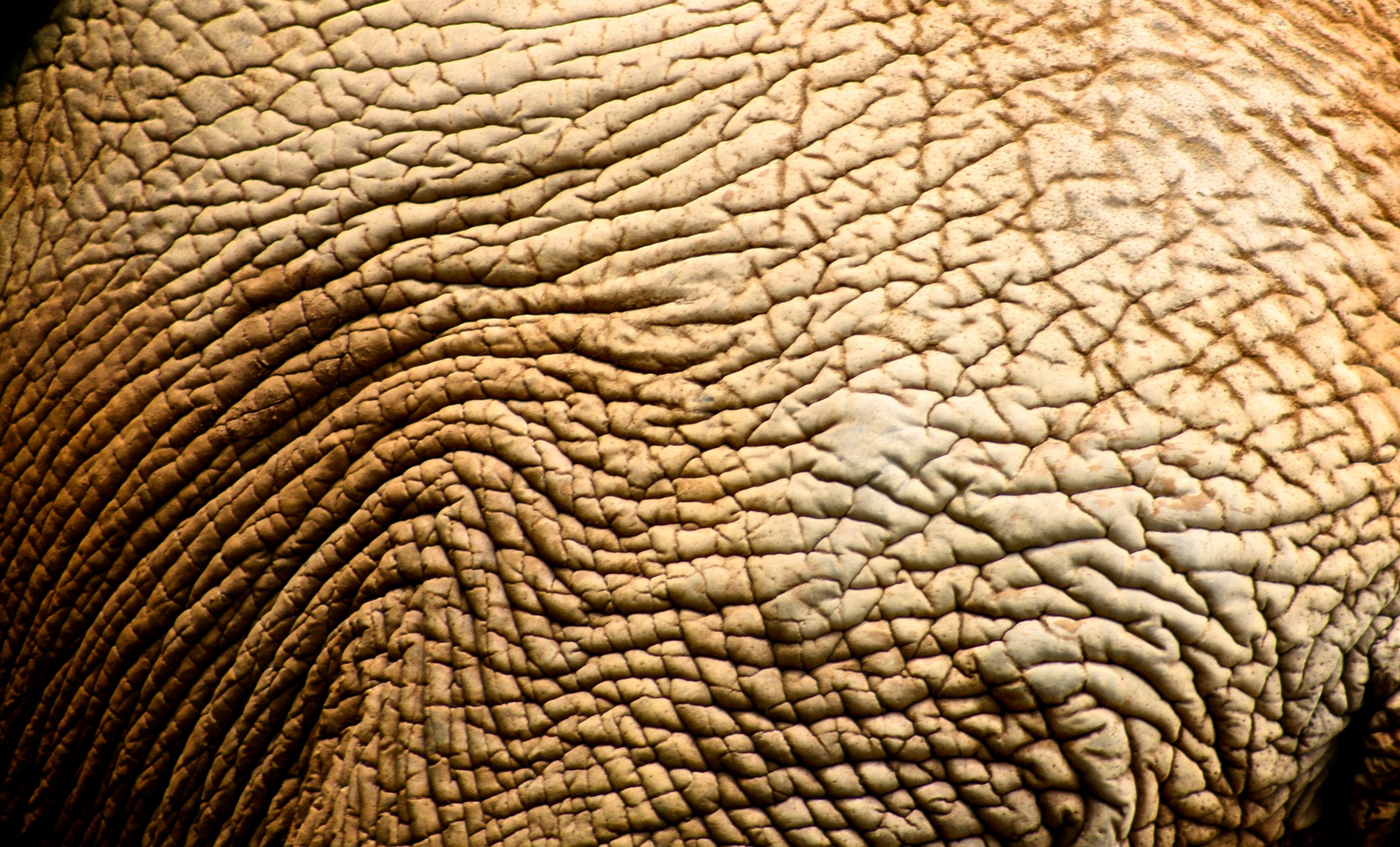 Wallpapers Backgrounds   Skin Texture Anderson Mancini Elephant Zoo SP 3607x2182