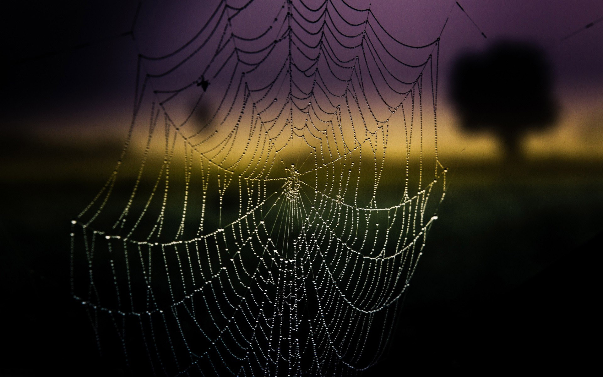 Wallpapers Photography Spider Web Background 1920x1200