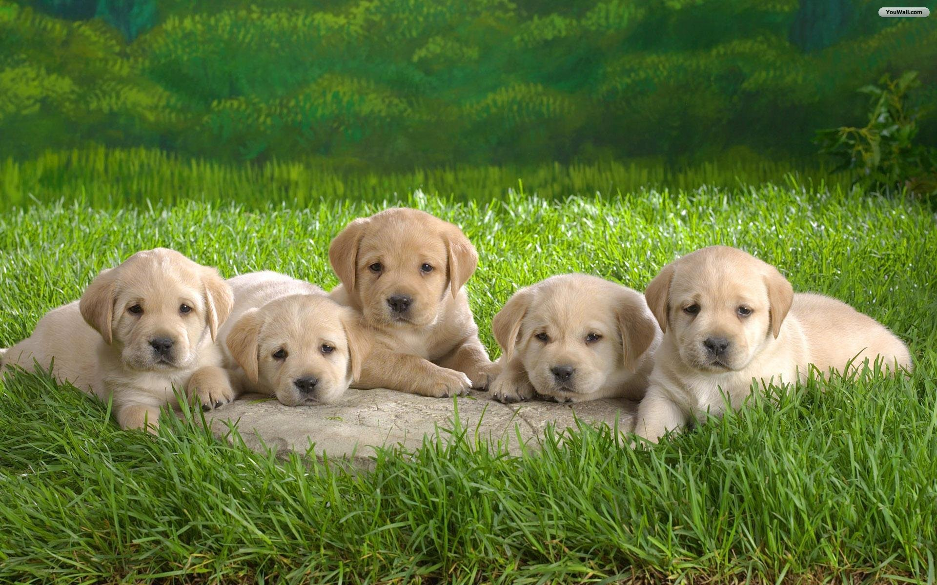 Cute Puppy Desktop Backgrounds Cute desktop wallpaper 1920x1200