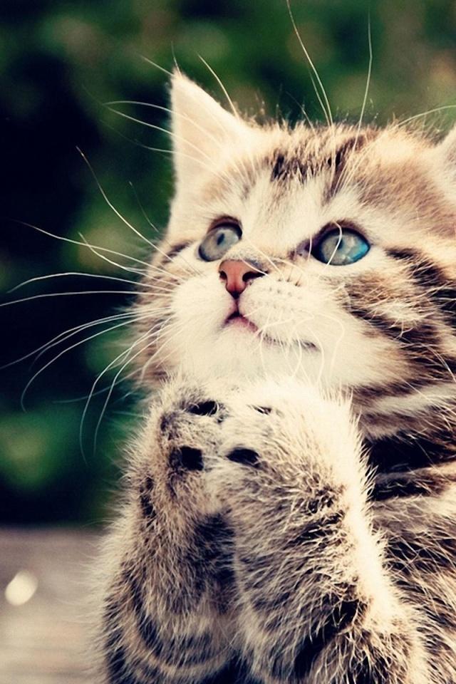 Free Download 640x960 Cute Kitten Iphone 4 Wallpaper 640x960 For Your Desktop Mobile Tablet Explore 48 Cute Cat Iphone Wallpaper Wallpaper For Cats Cute Cats And Kittens Wallpaper Wallpaper Cats And Kittens