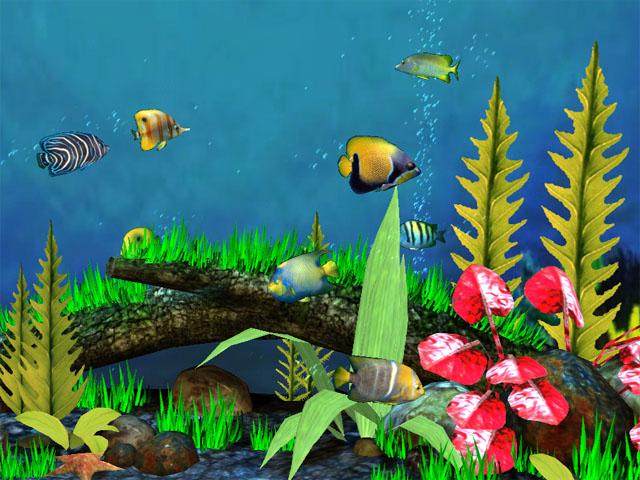 Fish Aquarium 3D Screensaver   Download Aquarium 3D Screensaver 640x480