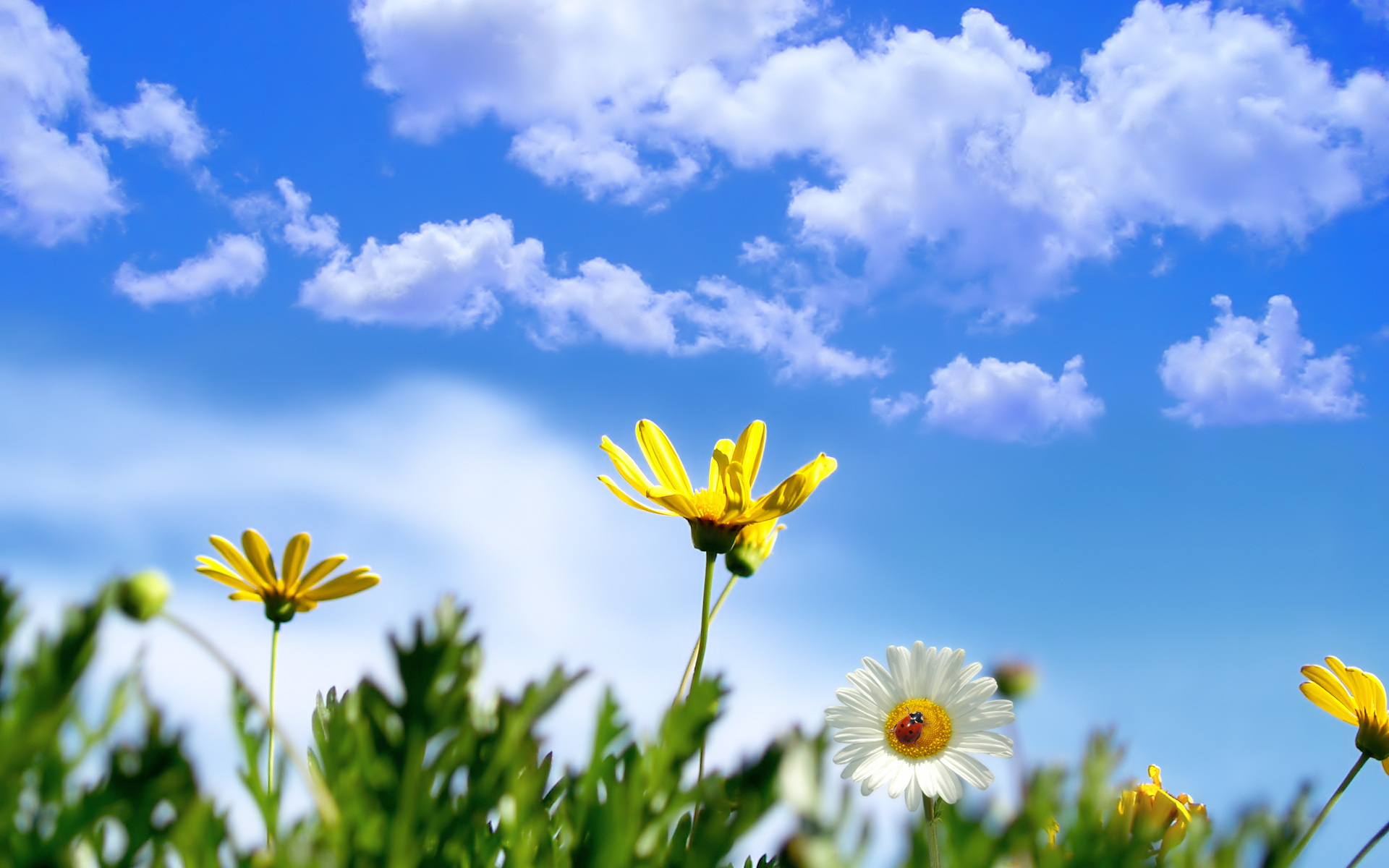Scenery Wallpaper Shows Sunny Springtime Keep Spring All 1920x1200