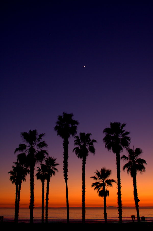 Palm Trees Sunset Wallpaper Palm Trees View of a Sunset 600x901