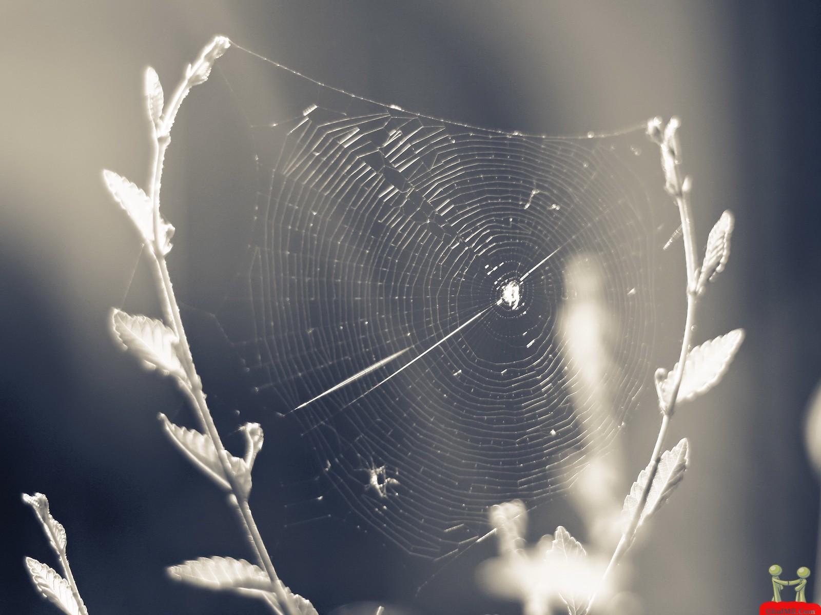 Spider Web In Jungle HD Wallpaper E Entertainment 1600x1200