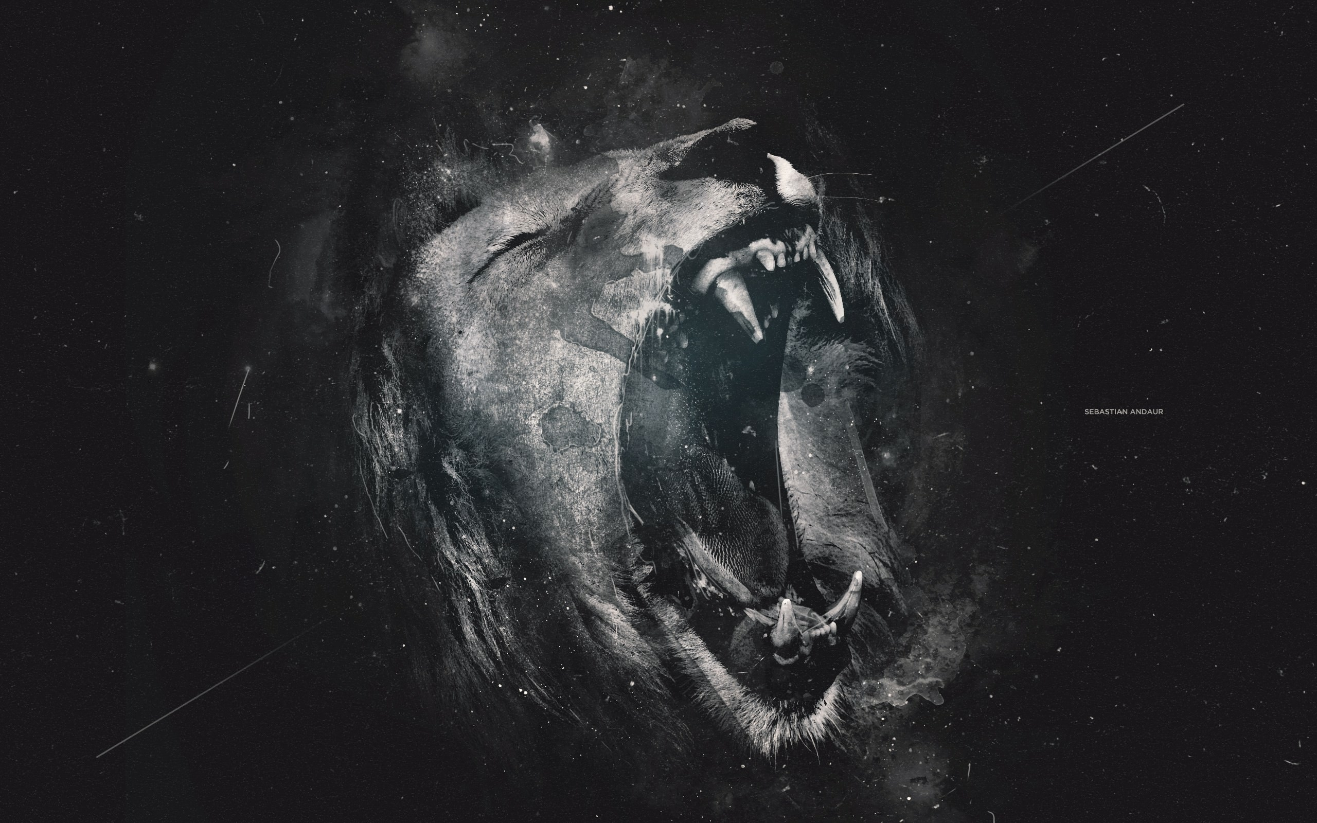 black lion wallpaper - wallpapersafari
