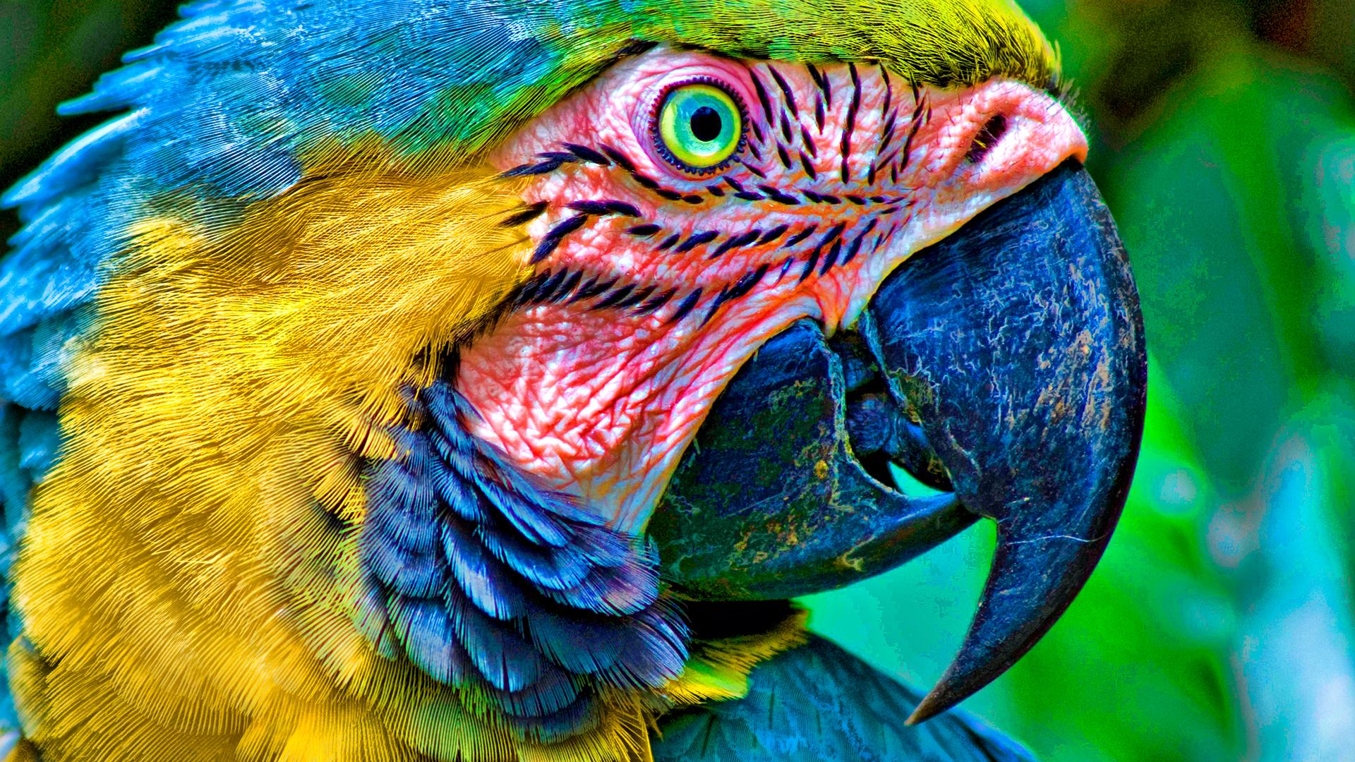 Parrot Desktop Wallpapers FREE on Latorocom 1920x1080