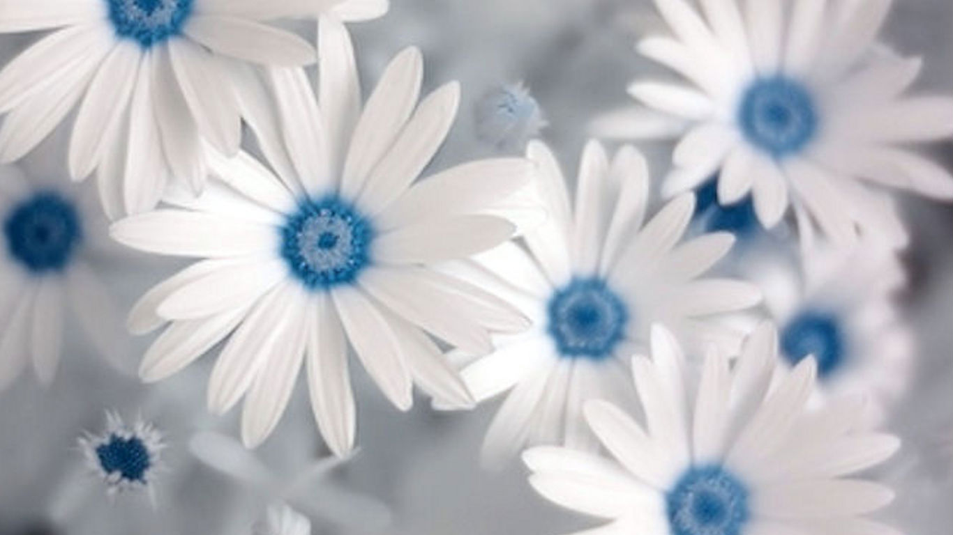 Blue wallpaper with white flowers wallpapersafari for Blue and white wallpaper