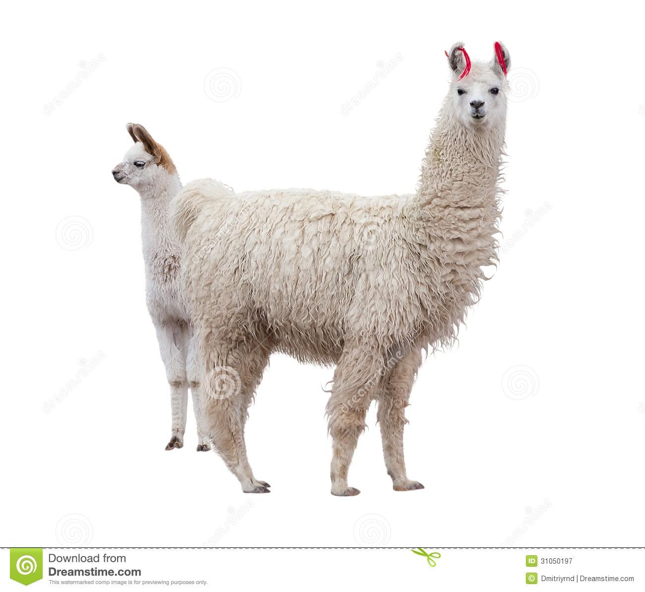 Llama Background Female llama with baby royalty 1300x1193