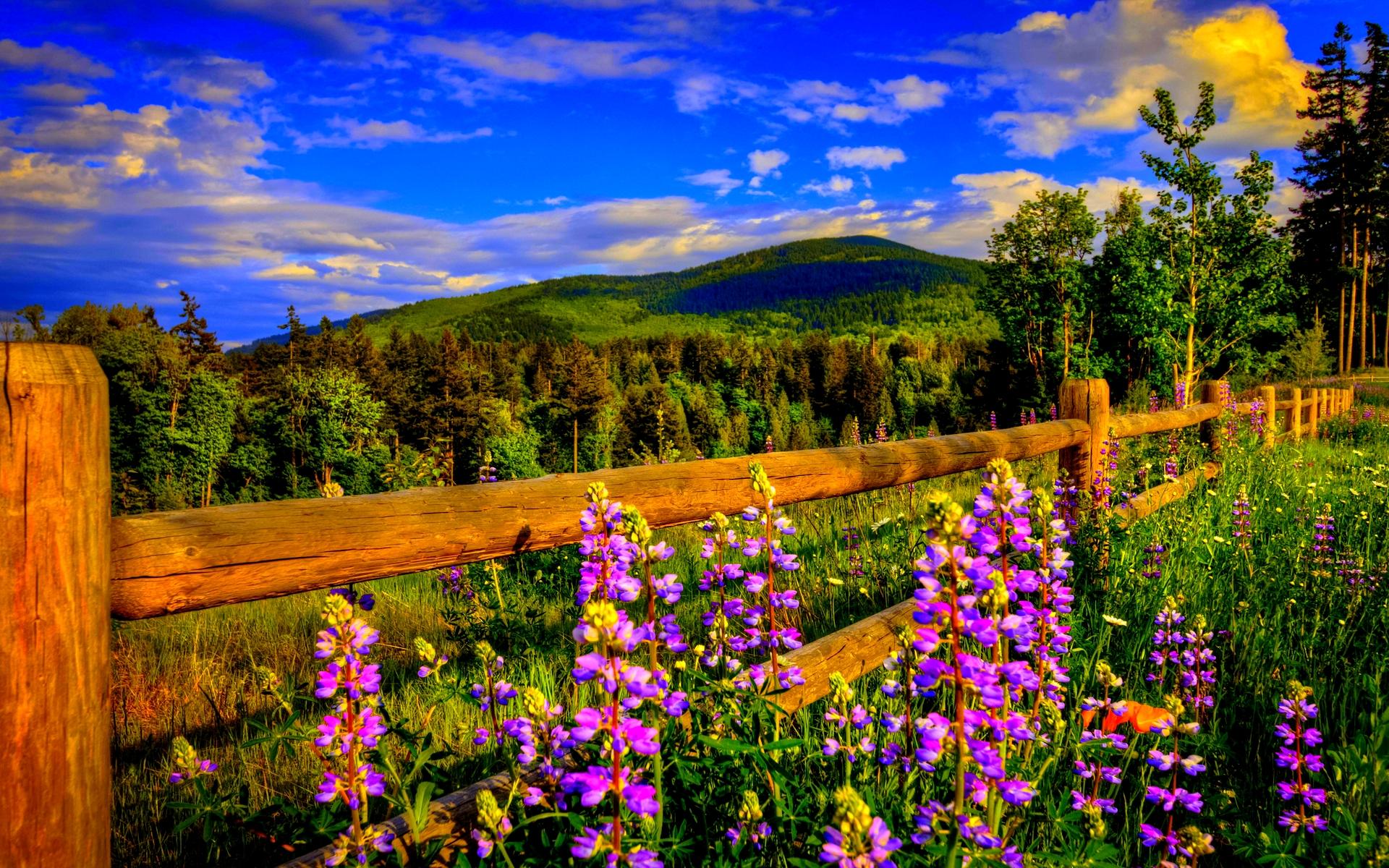 Springtime Landscape Wallpaper 1366 X 768 | Unique Landscape