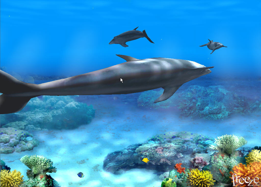living 3d dolphins animated wallpaper main view wallpaper window main 1024x737
